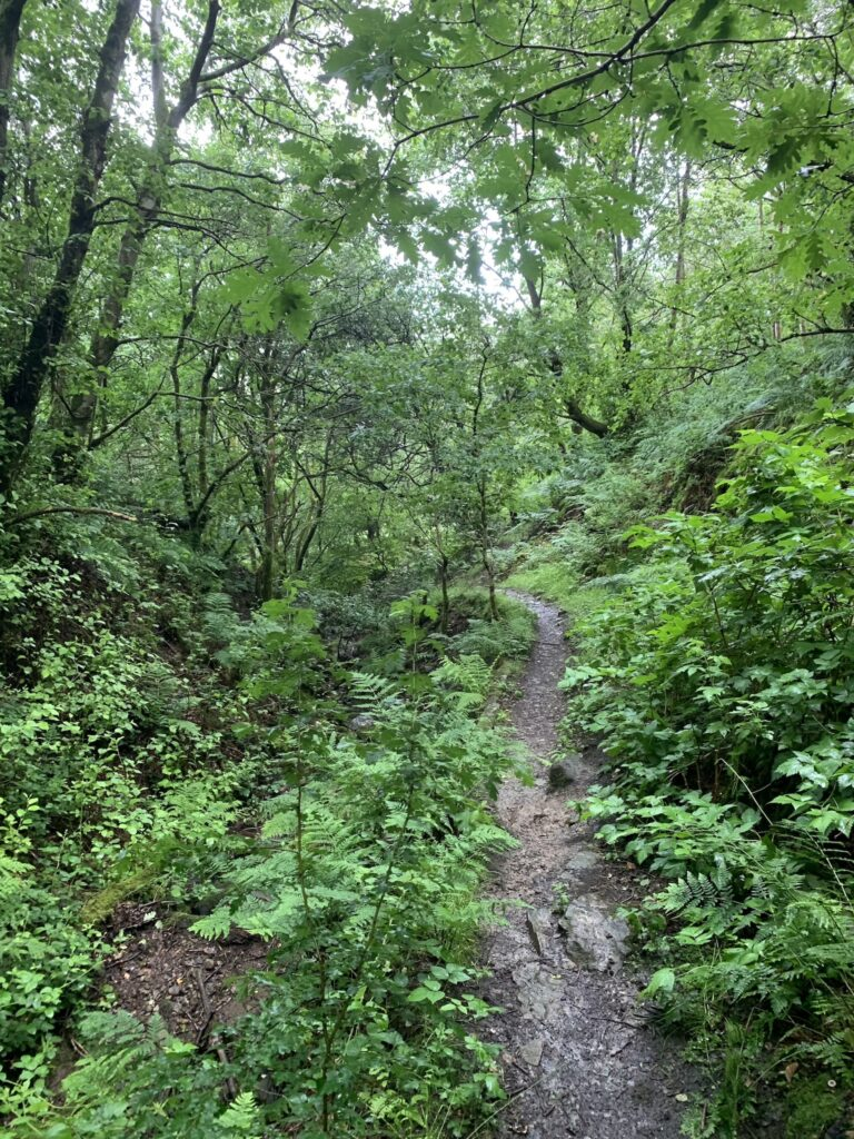 picture of overgrown wooded trail